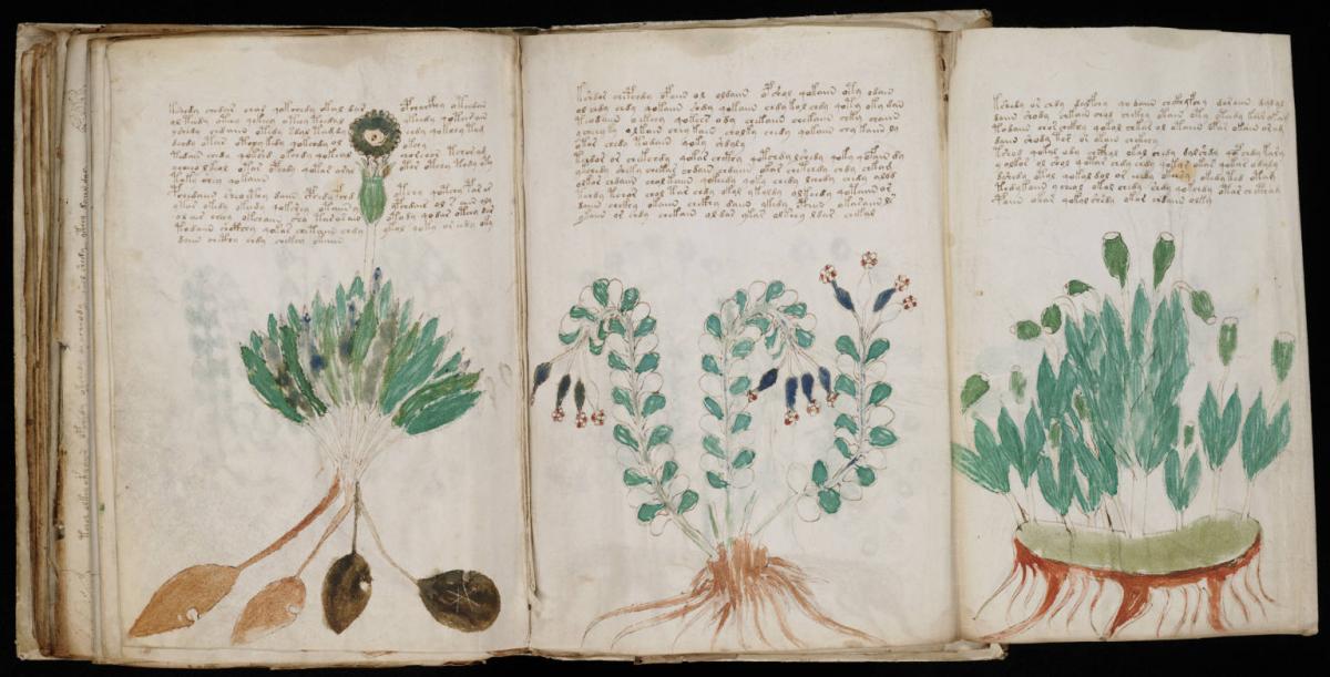 Штучному інтелекту вдалося розшифрувати мову манускрипта Войнича