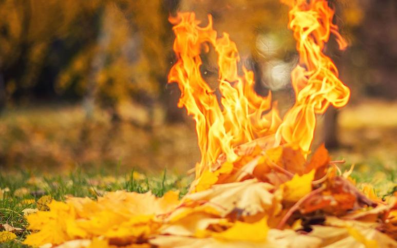 """Результат пошуку зображень за запитом """"паління листя"""""""